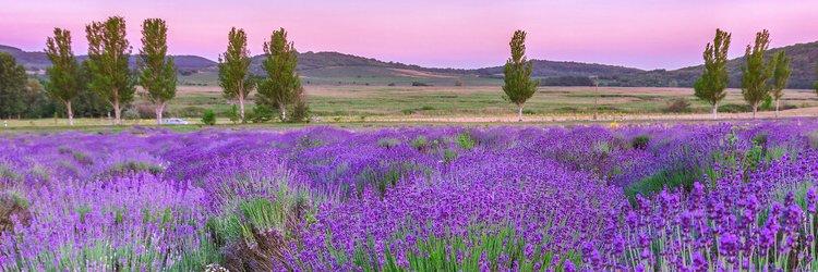 Urlaub Provence